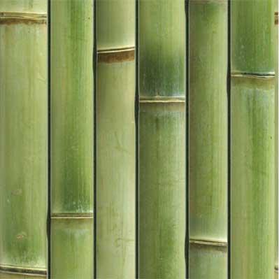 오래된 녹색 대나무 벽 - ONETHATCH