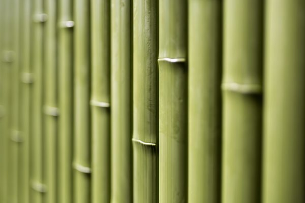 young green bamboo slat panel - OneThatch